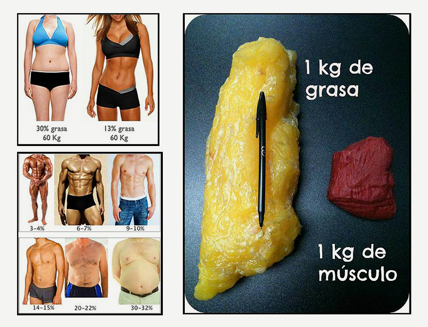 Músculo vs grasa | Hacked By Mr Virus Dz
